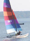 1982 Hobie 16 sailboats